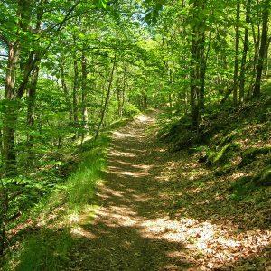 Sentier de la RNR des gorges de la Loire