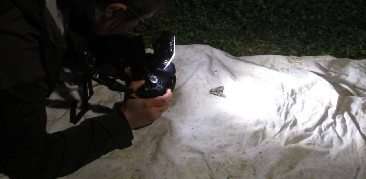 Photographe et papillon de nuit