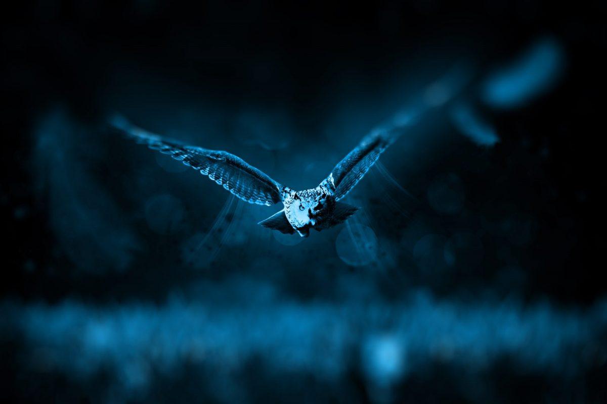 Hiboux dans la nuit