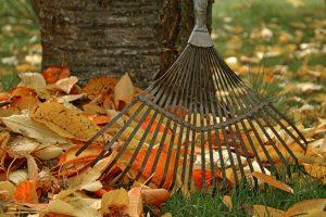 feuille d'automne sur le sol