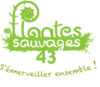 Plantes Sauvages 43