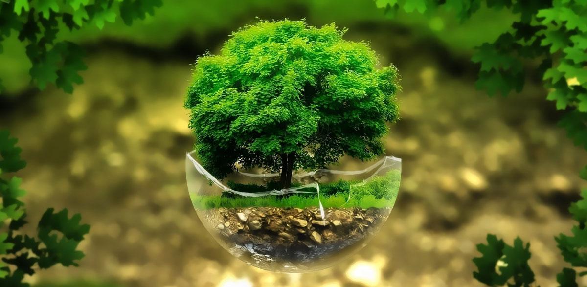 Conf Environnement 2020