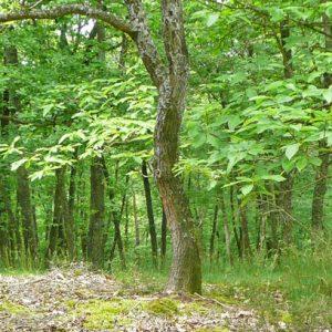 Sous-bois de la Réserve naturelle régionale des Gorges de la Loire