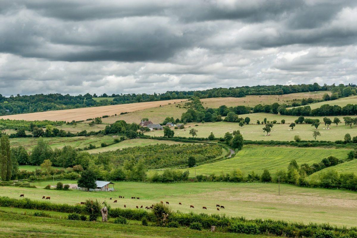 terrain agricole haies