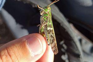 Suivi des insectes