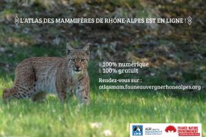 Atlas mammifères